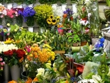 Hidden Objects Flower Shop